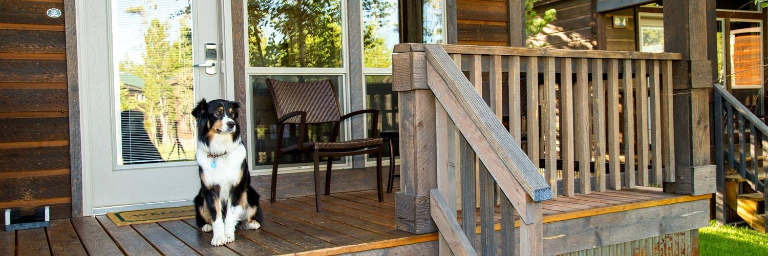 Dog sitting on the porch of Yellowstone pet-friendly cabins